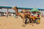 PUSHKAR, INDIA - NOVEMBER 22, 2012: Camel taxi for tourists at Pushkar camel fair (Pushkar Mela) - a