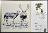 CHINA - CIRCA 1988: A stamp printed in China shows elk Pere David's deer Elaphodus davidianus
