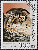 A stamp printed in Azerbaijan shows cat Scottish Longhair Fold
