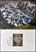 stamp printed in Liechtenstein dedicated to mosses and lichens shows parmelia physodes