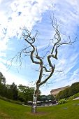 "This Photo Of A Metal Tree, ""graft""( 2008-2009) By American Artist Roxy Paine, Was The Highlight Of"