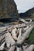 image of driftwood  - Driftwood washed up on a rocky beach - JPG
