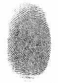 image of fingerprint  - A Fingerprint photographed on white background - JPG