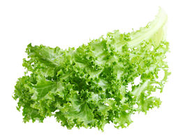 stock photo of endive  - Curly Endive chicory salad isolated on white background - JPG