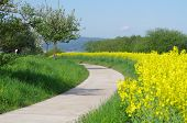 A cycle track in the rape field
