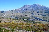 Sleeping beauty of Mount St Helens