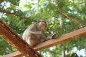 Thai Monkey Sitting On The Iron Railing