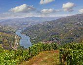 Vineyard Landscape In The Douro Region, Portugal