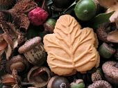 Candian maple cookie surrounded by autumn nature