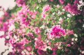 Paper Flowers Or Bougainvillea Vintage