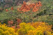 Sedona foliage on a cloudy fall day