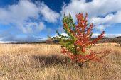 Wild Vastness With Unusual Tree