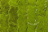Plain brick flooring terrace with weeds and moss in between