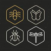 Vector Insect Icons In Line Style