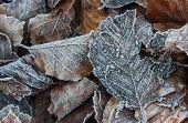 frosty autumn leaves background texture