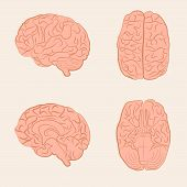 vector brain illustration