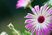 image of daisy flower  - Flower Meadow With A Few Daisy Flowers Close Up - JPG