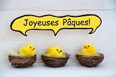 Three Chicks With Comic Speech Balloon French Joyeuses Paques Means Happy Easter