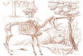Legendary Animals And Monsters: Unicorn