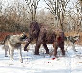 Dire Wolves Hunting Juvenile Woolly Mammoth