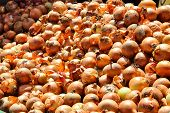 Onions At The Market
