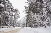 Snowfall On The Mountain Road