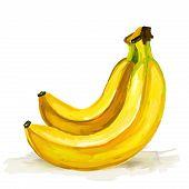banana  vector illustration  hand drawn  painted watercolor