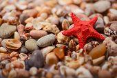 Sea  star on the sea shore