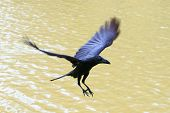 picture of legs air  - file of flying crow floating on air - JPG