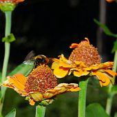 taking off bumblebee