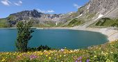 Dam Lake Lunersee And Spring Flowers, Austira