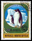 Vintage  Postage Stamp.  Penguins.