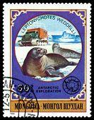 Vintage  Postage Stamp.  Weddelli Seals.