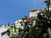 Old House And Cactus