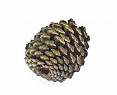 Cedar Cone On White Background