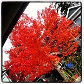 Brilliant Fall