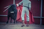 picture of bulls  - Fighting bull picture from Spain - JPG