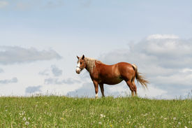 picture of workhorses  - A workhorse in a field - JPG