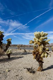 stock photo of chola  - Landscape in Joshua tree NP with strange airplane trails covering the blue sky - JPG