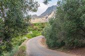 foto of fynbos  - Road to a wine farm near Stellenbosch in the Western Cape Province of South Africa - JPG