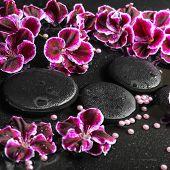 stock photo of geranium  - beautiful spa still life of blooming dark purple geranium flower and beads on reflection dark water closeup  - JPG