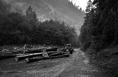 stock photo of logging truck  - Freshly cut tree logs piled up near a forest road - JPG