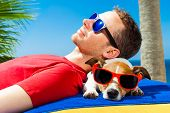 pic of jacking  - jack russell dog and owner sunbathing a having a siesta under a palm tree on summer vacation holidays at the beach - JPG