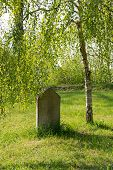 stock photo of tombstone  - old tombstone standing in the grass under a birch tree - JPG