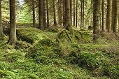 image of decomposition  - The primeval forest with mossed ground  - JPG