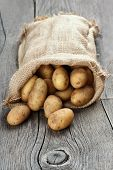 picture of potato-field  - Potatoes in burlap sack on wooden background focus on potato in front  - JPG
