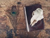 stock photo of taxidermy  - An old notebook with a peacock feather and a sheep skull on a wooden desk - JPG