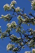 White Blooms On Tree