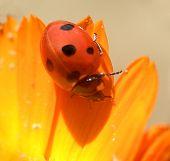 Ladybird...(3)