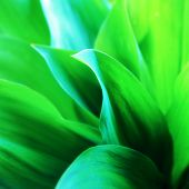 Fresh green leaves, lily of the valley.